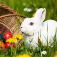 Join in the Easter celebrations at Seven Lochs Westland Park and find as many Easter bunnies as you can to get your chocolate prize!