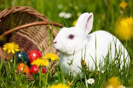 Easter Bunny Hunt at Provanhall House