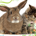 This year the Cats Protection Adoption Centre are holding their Easter Egg-stravaganza on Monday the 6th April. A guaranteed fun filled day out for all the family!