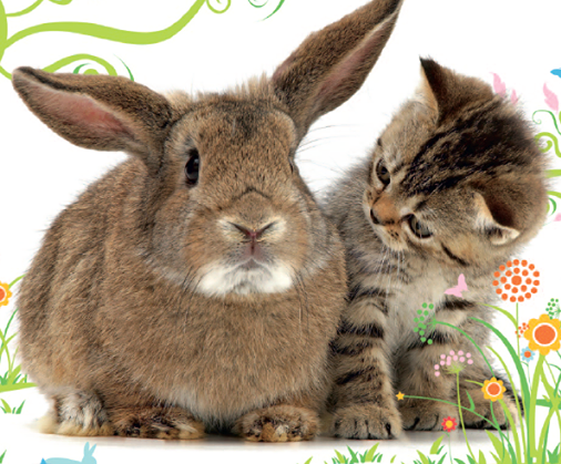 Cats Protection Easter Eggstravaganza