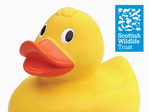 scottish-wildlife-trust-east-duck-race